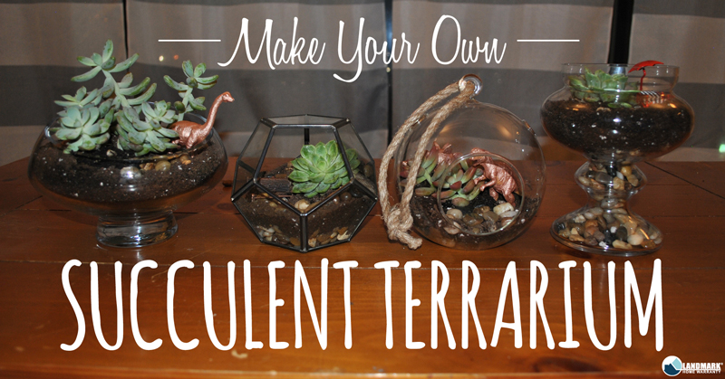 Make and maintain a succulent terrarium.