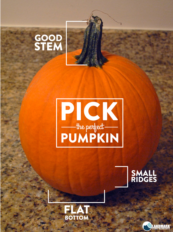 Use this guide to find the perfect pumpkin for your carving masterpiece.