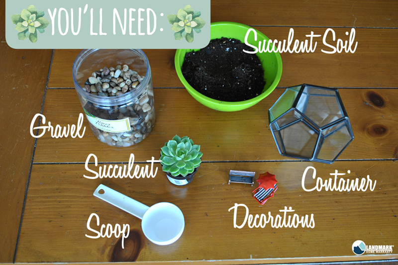 What you will need to make your succulent terrariums.
