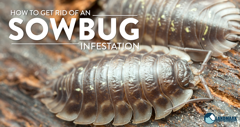 All About Sow Bugs and How to Get Rid of an Infestation